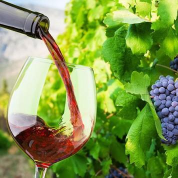 Wereldse wijnen, de moeite waard om te kopen voor WensAmbulance Brabant